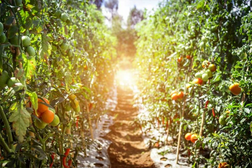 6-Sustainable-Organic-Farming-Methods-Everyone-Should-Know-About