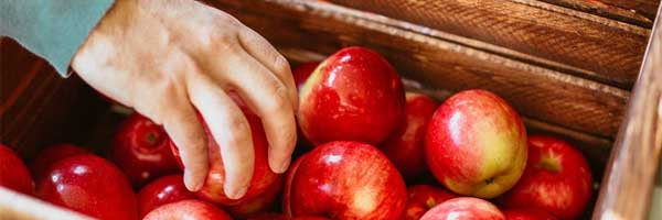 5 Things to Do While Waiting for the Apple Harvest Season to Start apple box - 5 Things to Do While Waiting for the Apple Harvest Season to Start