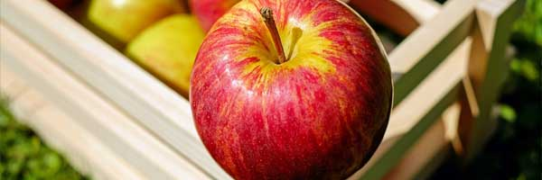 5 Things to Do While Waiting for the Apple Harvest Season to Start red apple - 5 Things to Do While Waiting for the Apple Harvest Season to Start